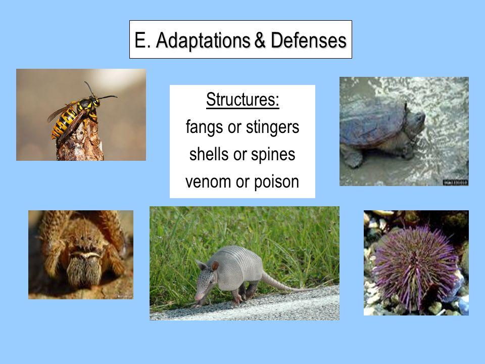 E. Adaptations & Defenses