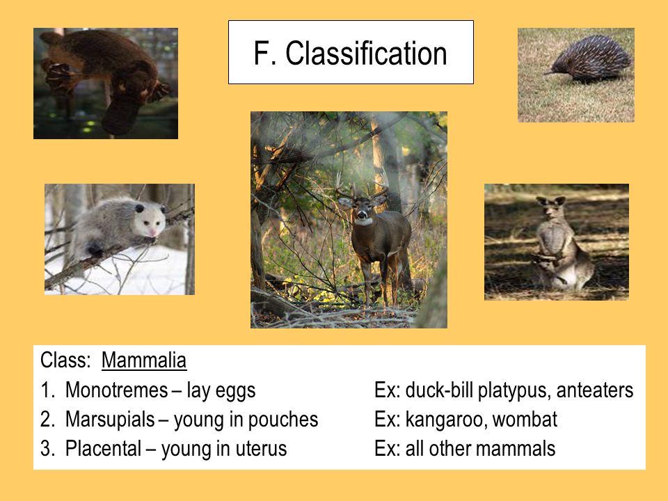 F. Classification Class: Mammalia