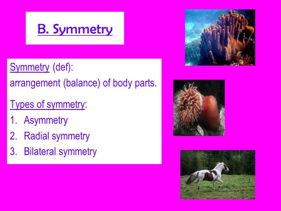 B. Symmetry Symmetry (def): arrangement (balance) of body parts.