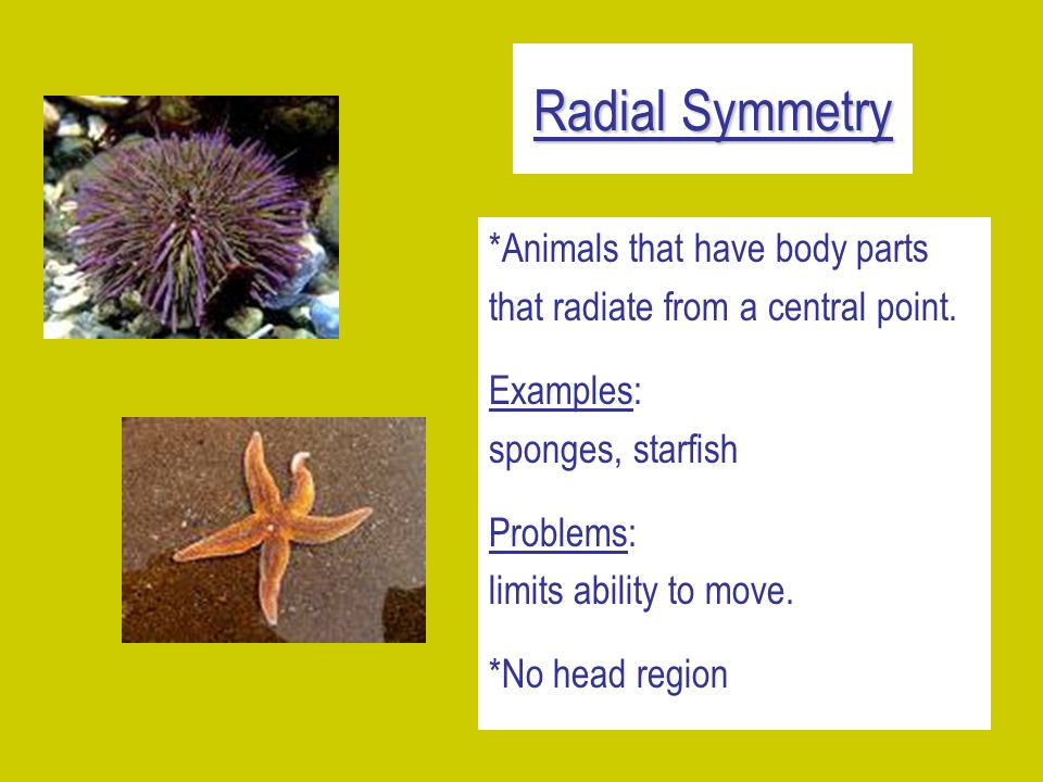 Radial Symmetry *Animals that have body parts