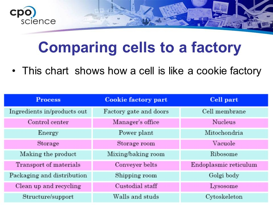 comparing a cell to a factory Here we are going to compare a eukaryotic cell to a factory a cell uses various materials and produces many products for the survival just like a factory.