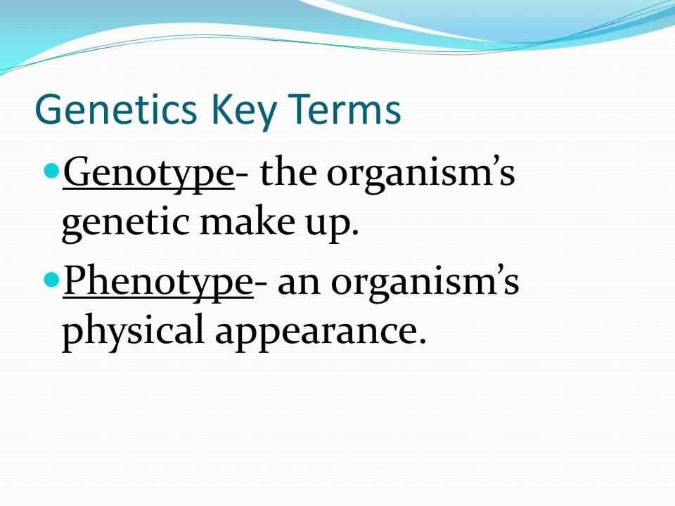 Genetics Key Terms Genotype- the organism's genetic make up.