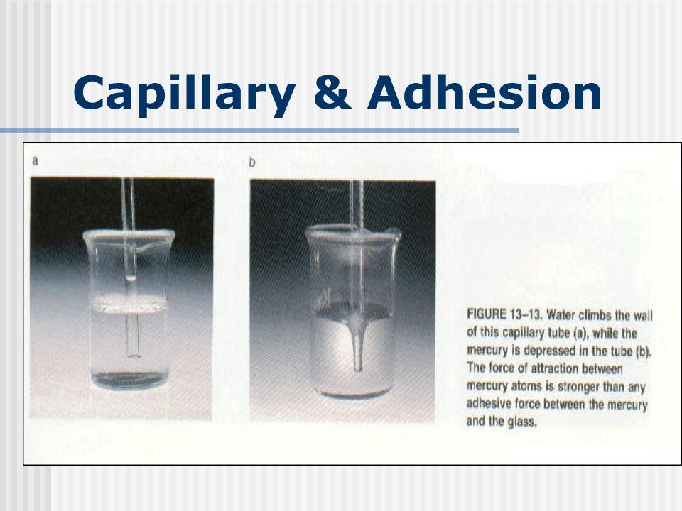 Capillary & Adhesion