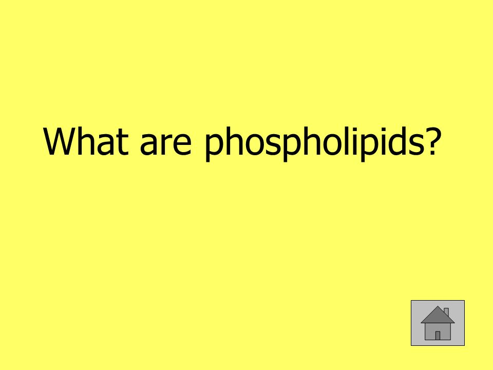 What are phospholipids