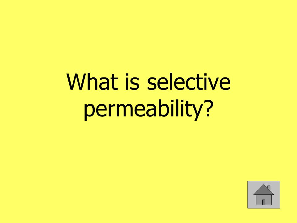 What is selective permeability
