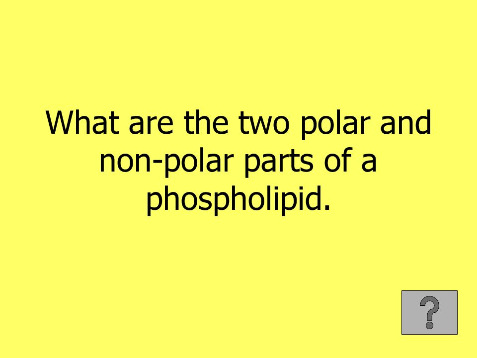 What are the two polar and non-polar parts of a phospholipid.