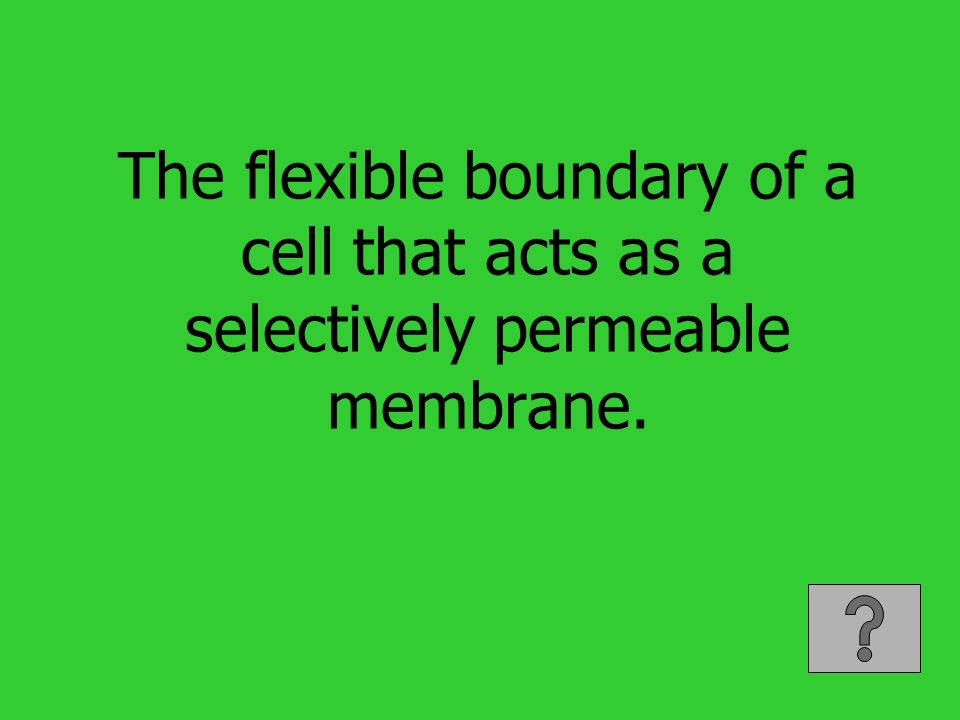 The flexible boundary of a cell that acts as a selectively permeable membrane.