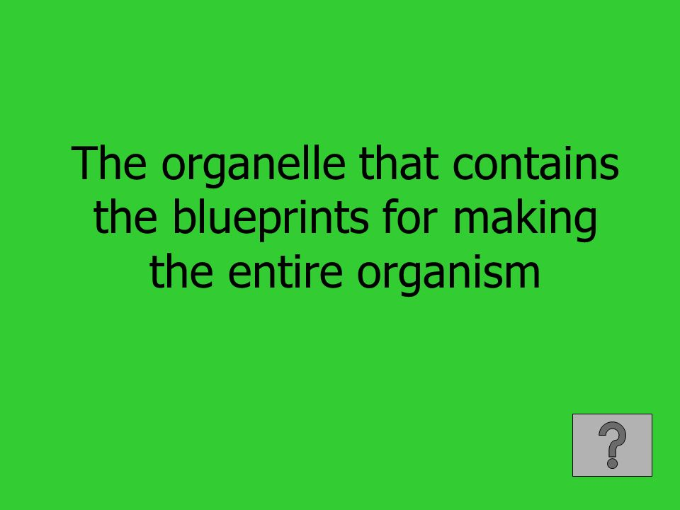 The organelle that contains the blueprints for making the entire organism