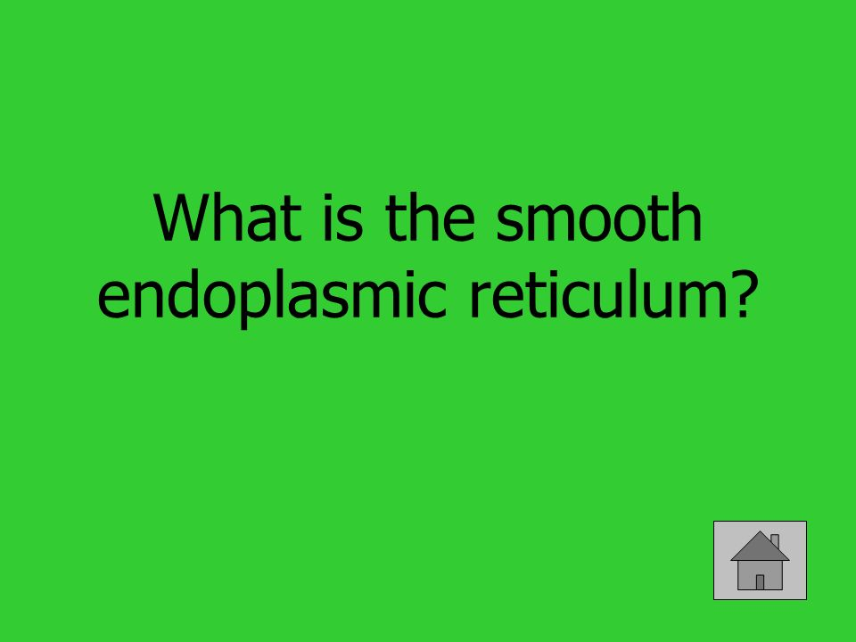 What is the smooth endoplasmic reticulum