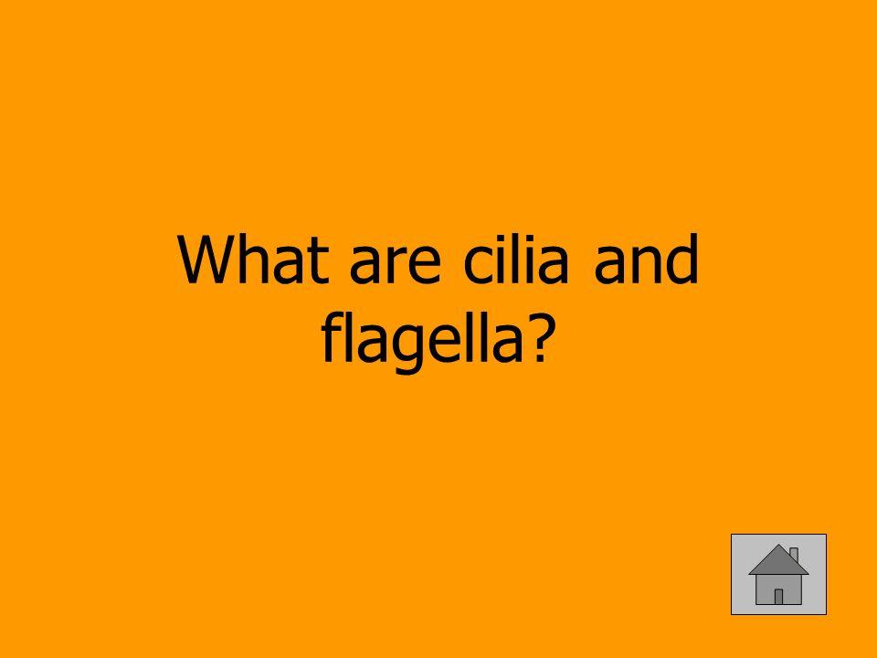 What are cilia and flagella