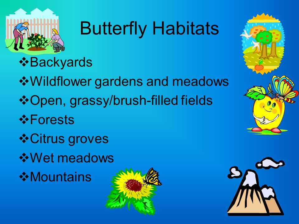 Butterfly Habitats Backyards Wildflower gardens and meadows