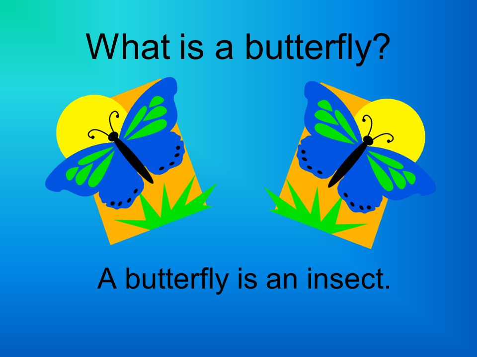 A butterfly is an insect.