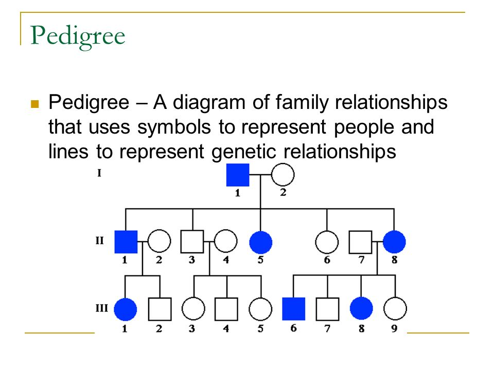 family relationship chart symbols and abbreviations