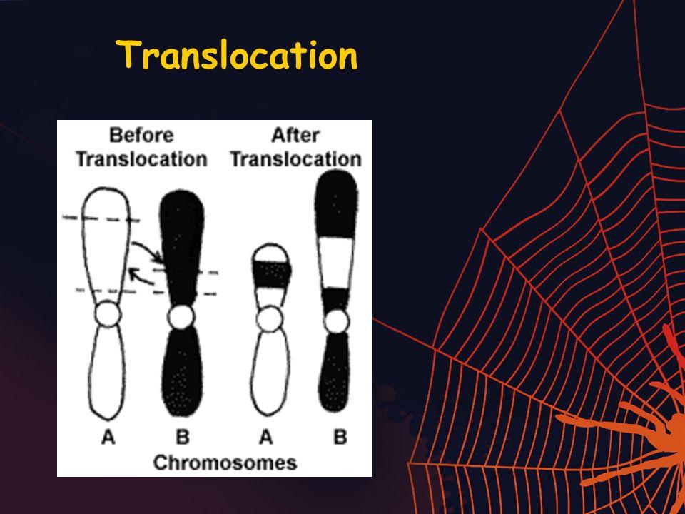 Translocation