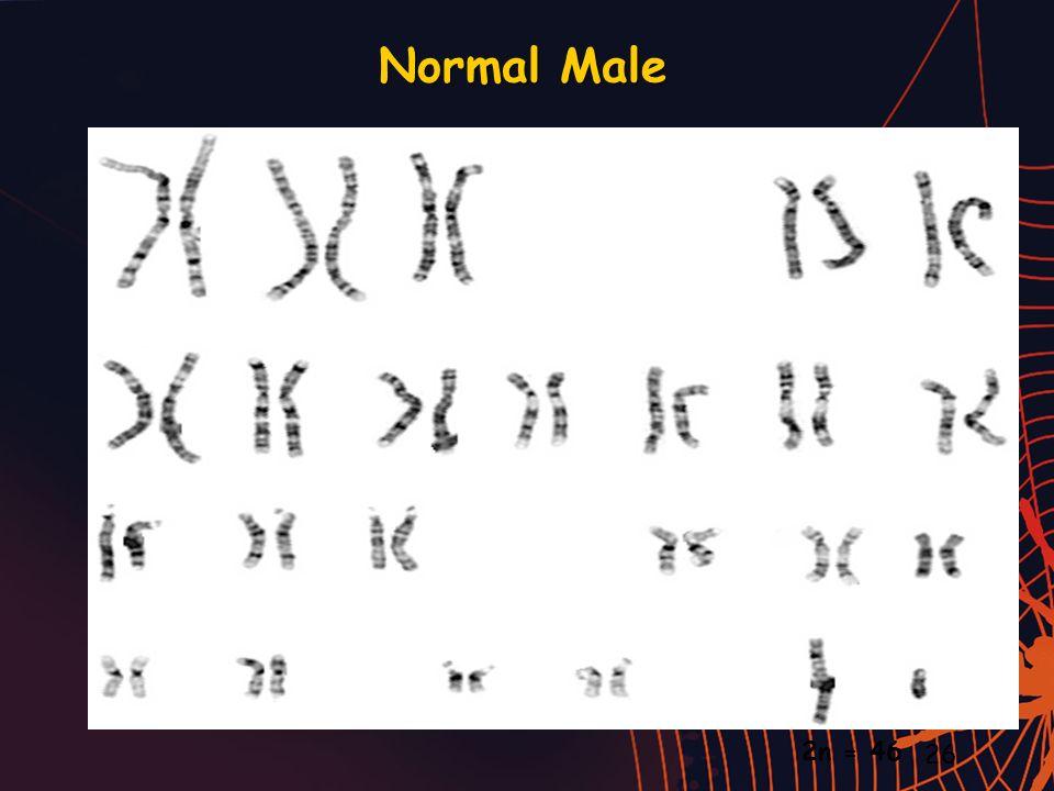 Normal Male 2n = 46