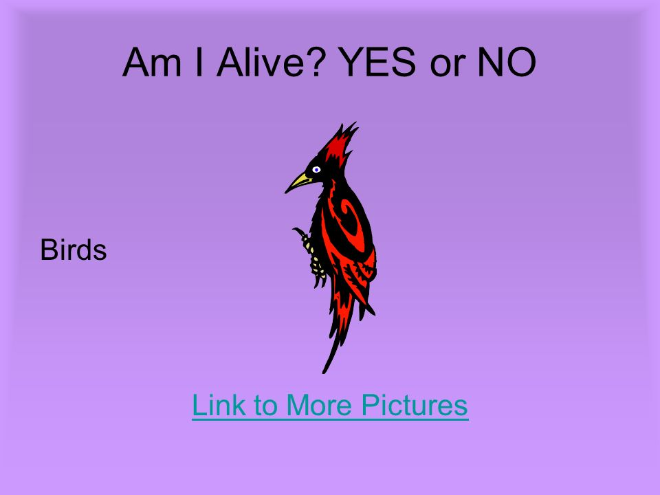 Am I Alive YES or NO Birds Link to More Pictures