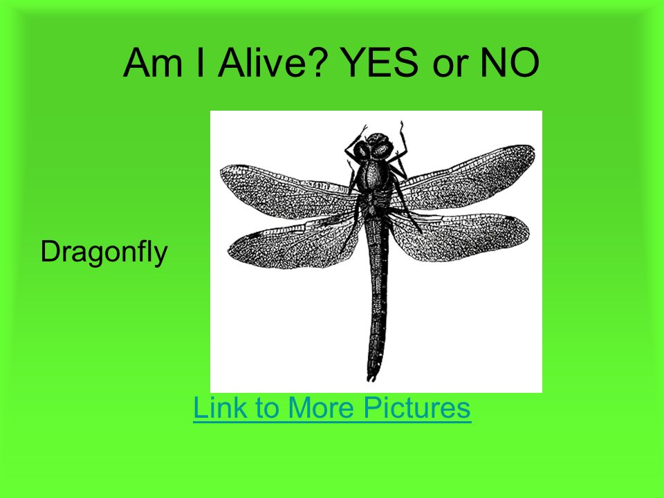 Am I Alive YES or NO Dragonfly Link to More Pictures