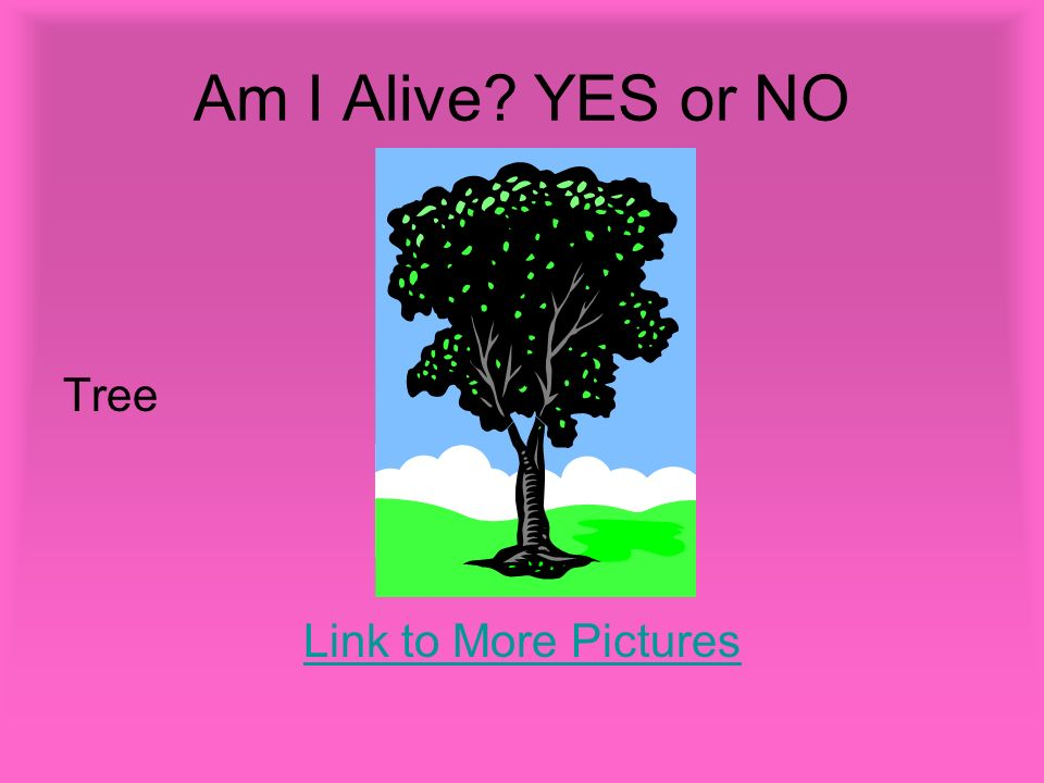 Am I Alive YES or NO Tree Link to More Pictures