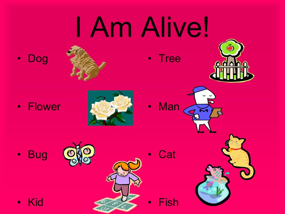 I Am Alive! Dog Flower Bug Kid Tree Man Cat Fish