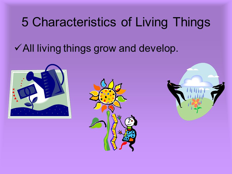 5 Characteristics of Living Things