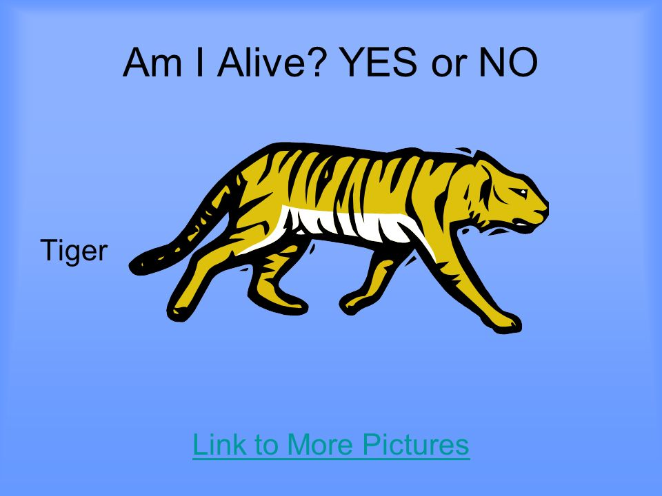 Am I Alive YES or NO Tiger Link to More Pictures