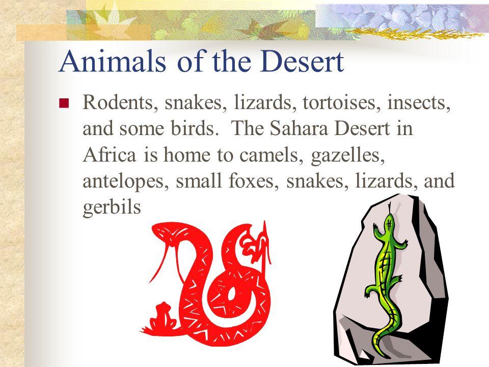 Animals of the Desert
