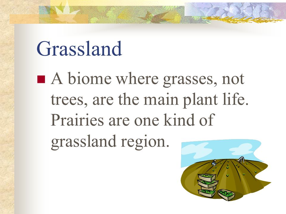 Grassland A biome where grasses, not trees, are the main plant life.