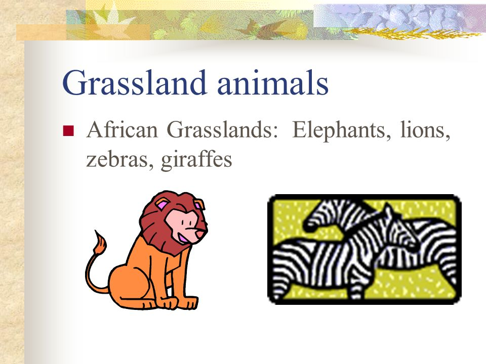 Grassland animals African Grasslands: Elephants, lions, zebras, giraffes