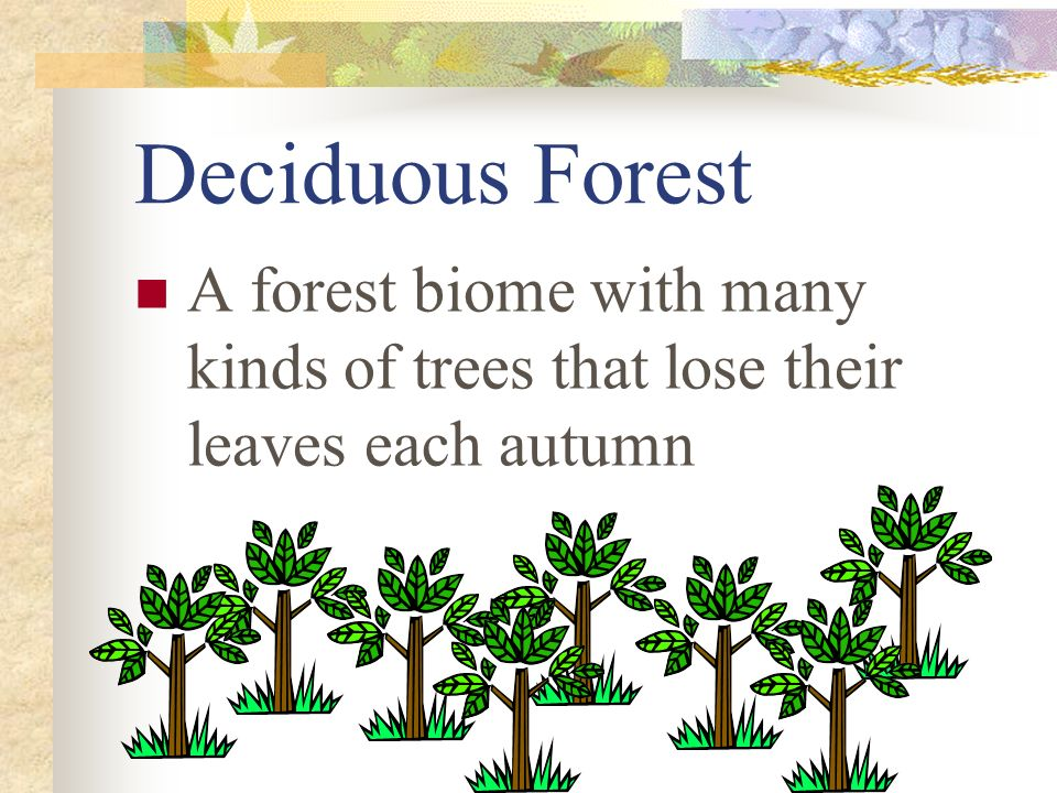 Deciduous Forest A forest biome with many kinds of trees that lose their leaves each autumn