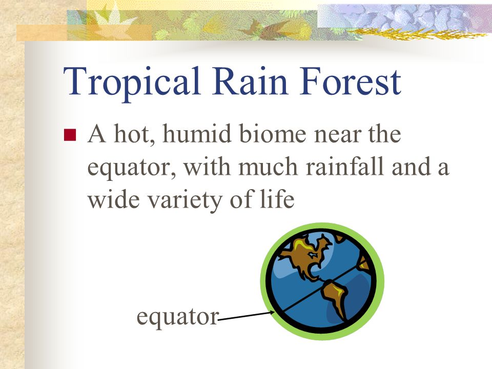 Tropical Rain Forest A hot, humid biome near the equator, with much rainfall and a wide variety of life.