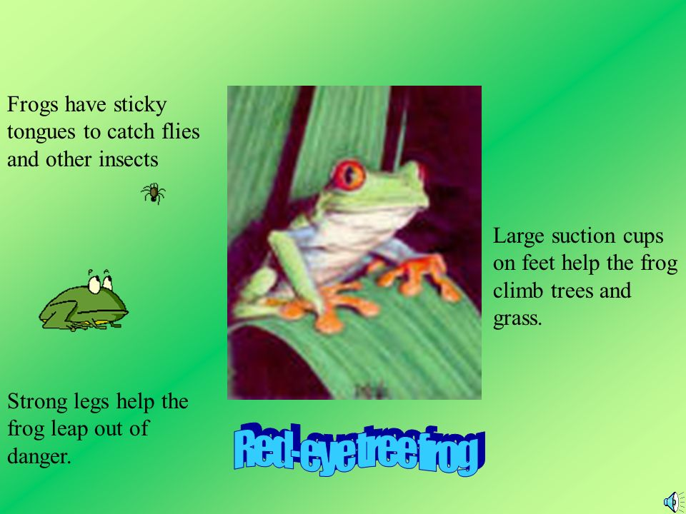Frogs have sticky tongues to catch flies and other insects