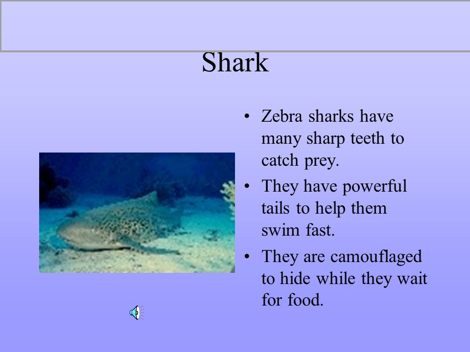 Shark Zebra sharks have many sharp teeth to catch prey.