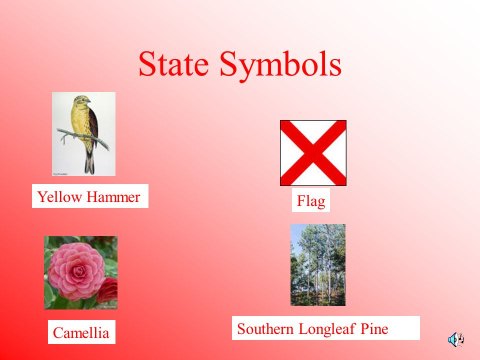 State Symbols Yellow Hammer Flag Southern Longleaf Pine Camellia