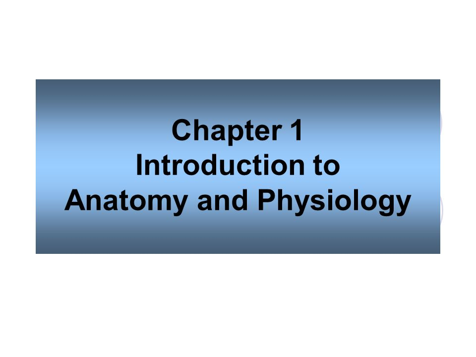 Ziemlich Essentials Of Human Anatomy And Physiology 10th Edition ...