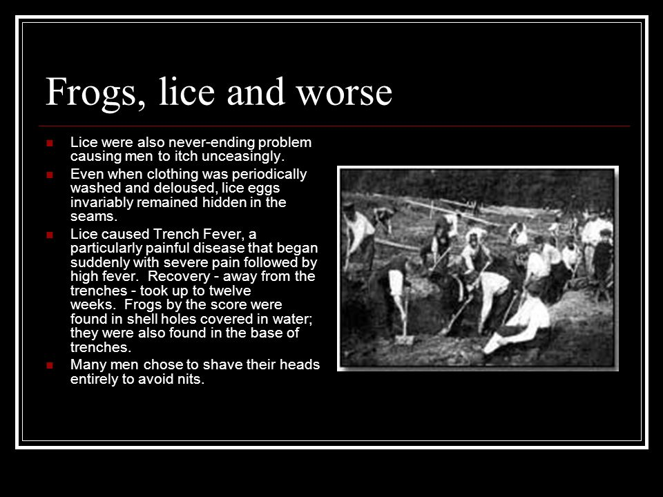 Frogs, lice and worse Lice were also never-ending problem causing men to itch unceasingly.