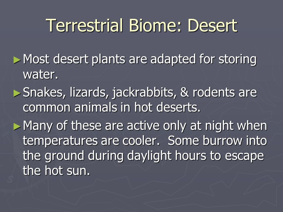 Terrestrial Biome: Desert