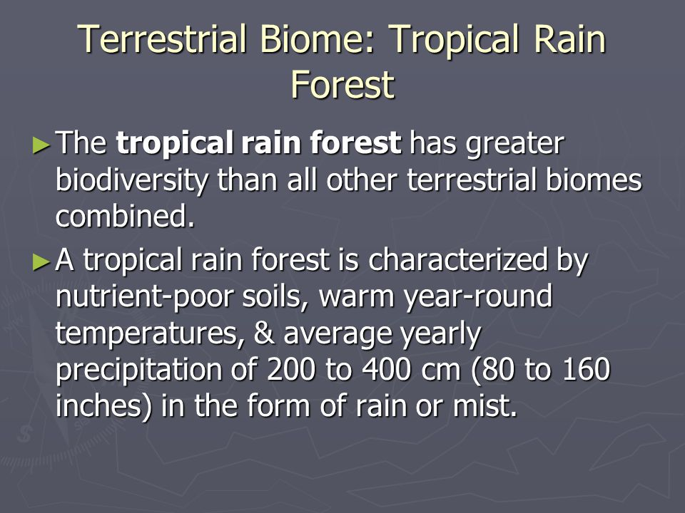 Terrestrial Biome: Tropical Rain Forest