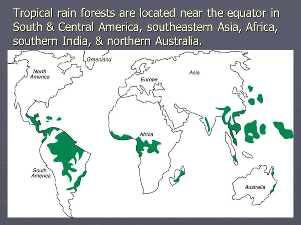 Tropical rain forests are located near the equator in South & Central America, southeastern Asia, Africa, southern India, & northern Australia.