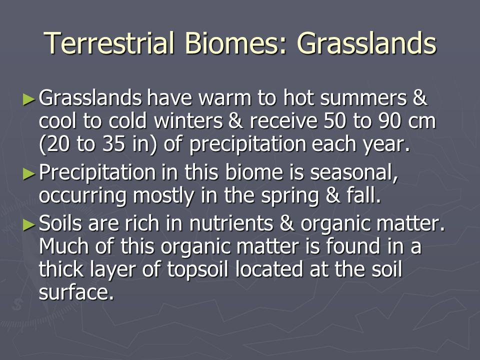Terrestrial Biomes: Grasslands