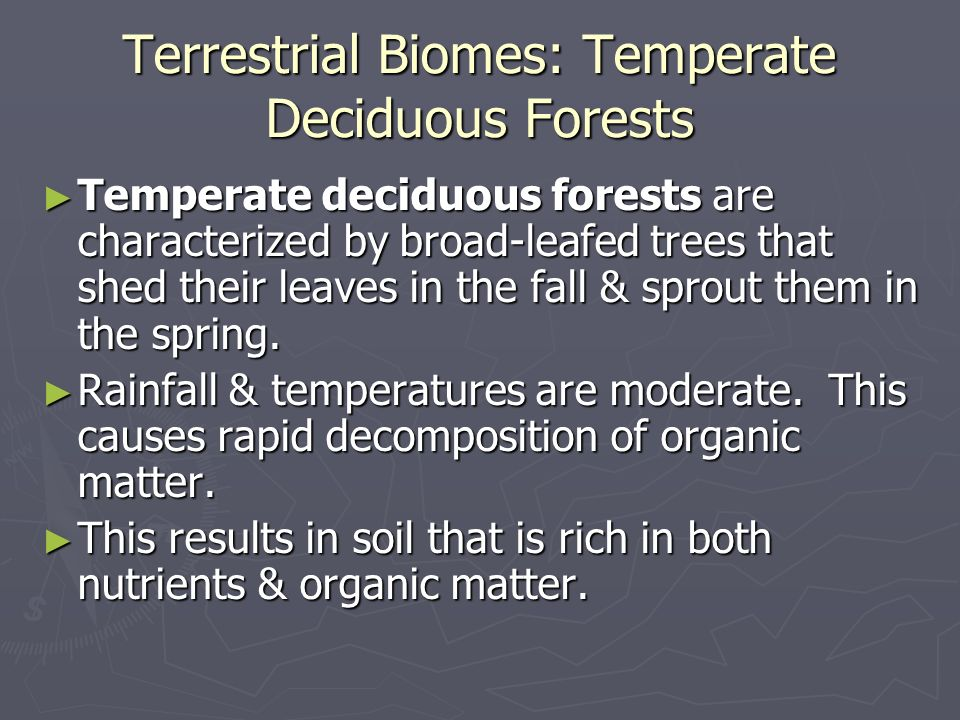 Terrestrial Biomes: Temperate Deciduous Forests
