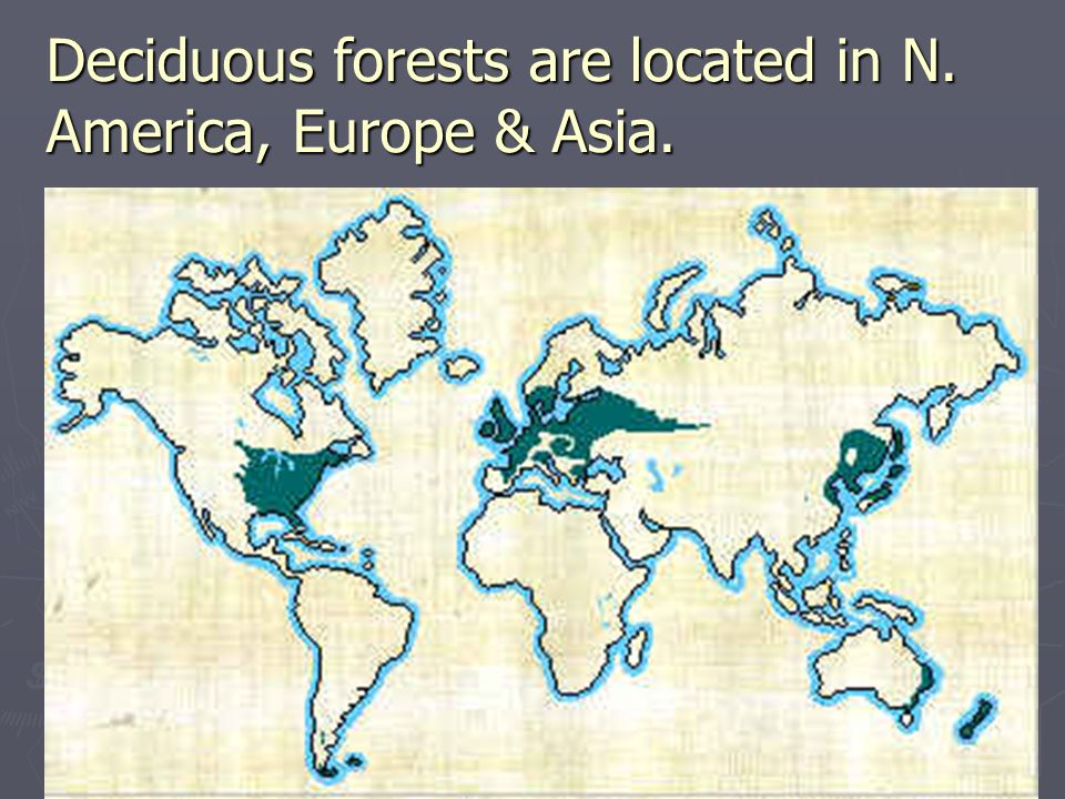 Deciduous forests are located in N. America, Europe & Asia.