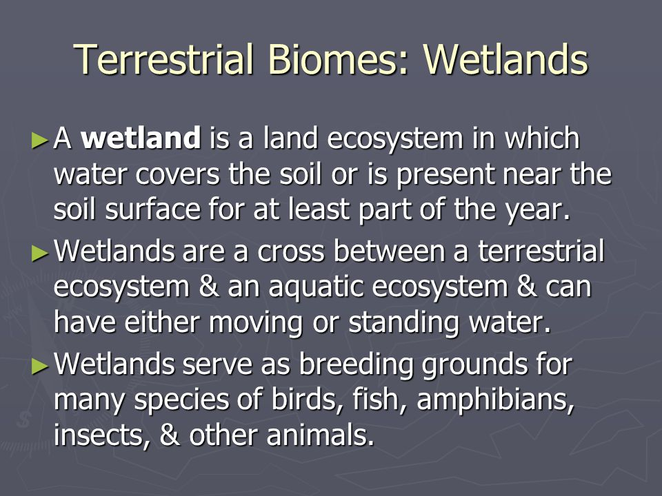 Terrestrial Biomes: Wetlands