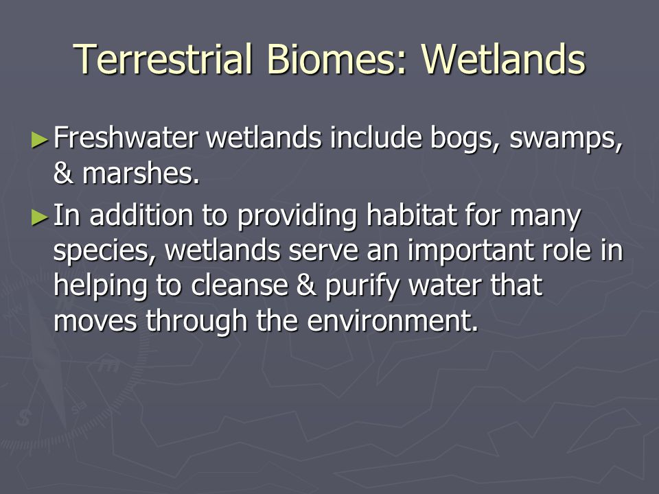 Importance of Wetlands