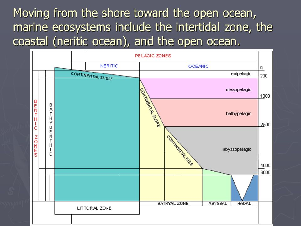 Moving from the shore toward the open ocean, marine ecosystems include the intertidal zone, the coastal (neritic ocean), and the open ocean.