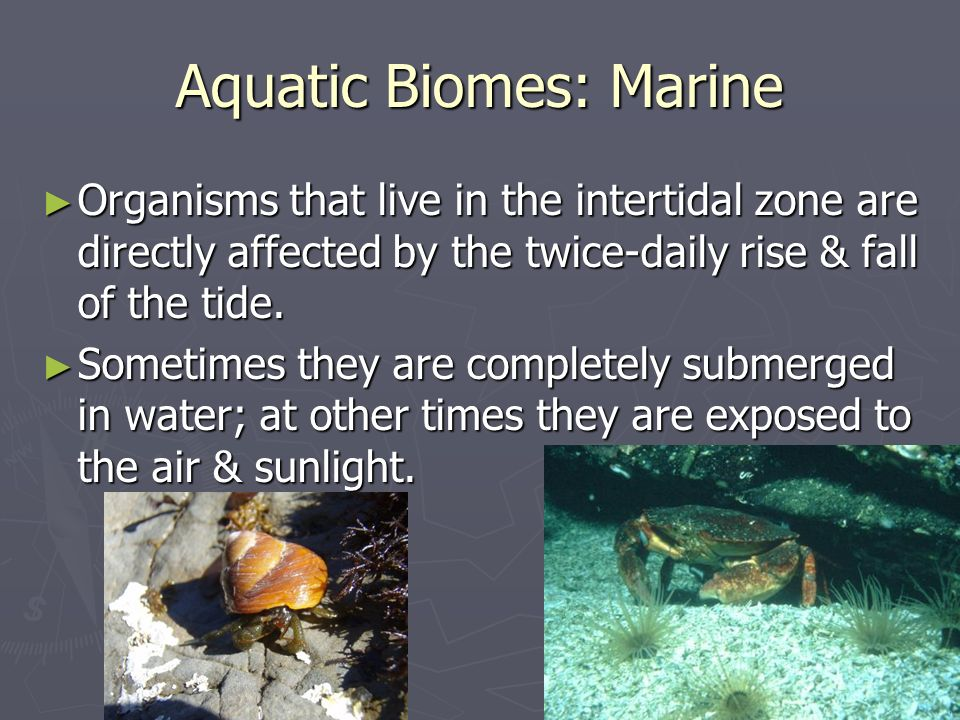 Aquatic Biomes: Marine