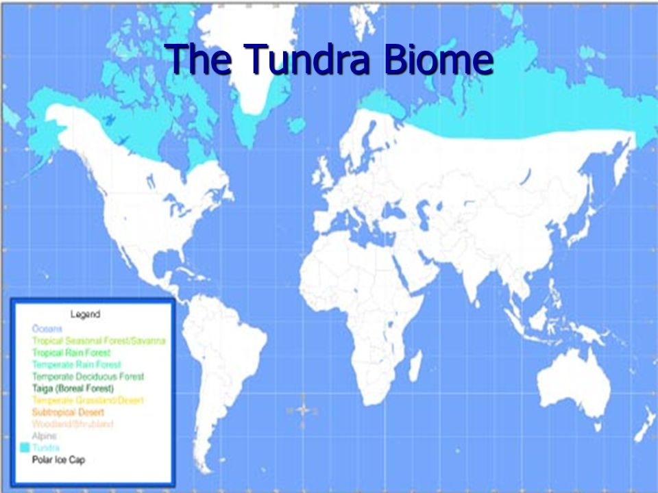 The Tundra Biome