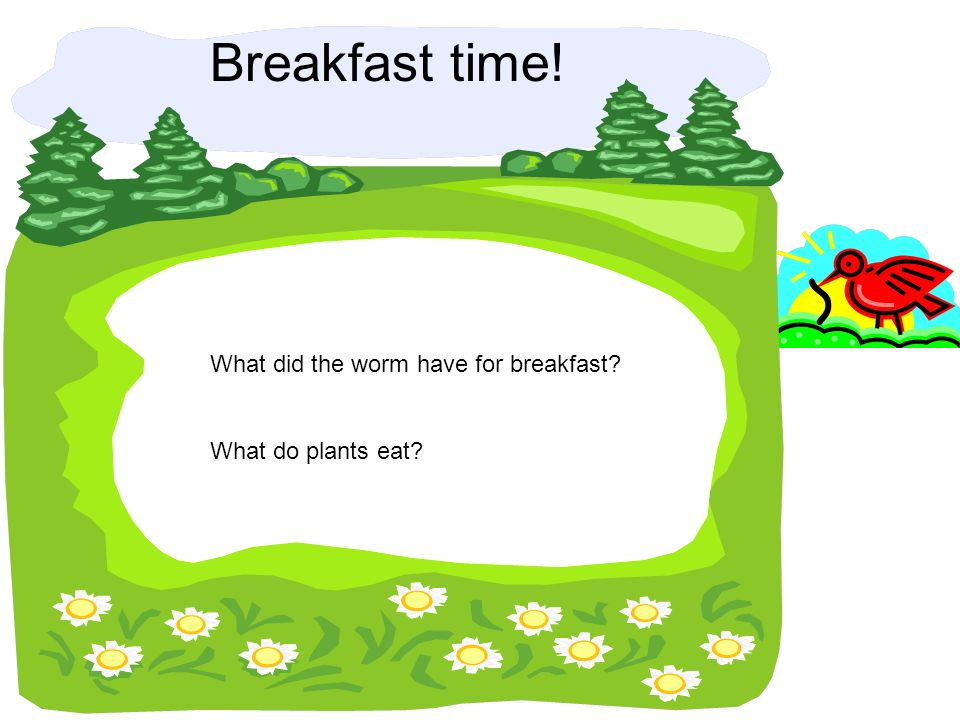 Breakfast time! What did the worm have for breakfast