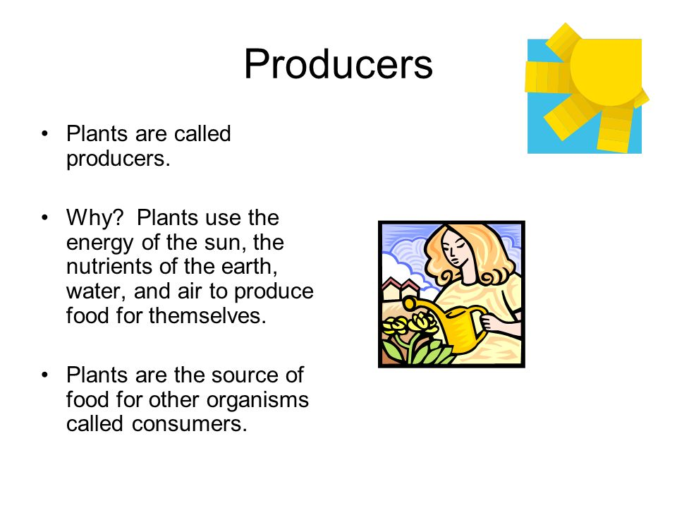 Producers Plants are called producers.