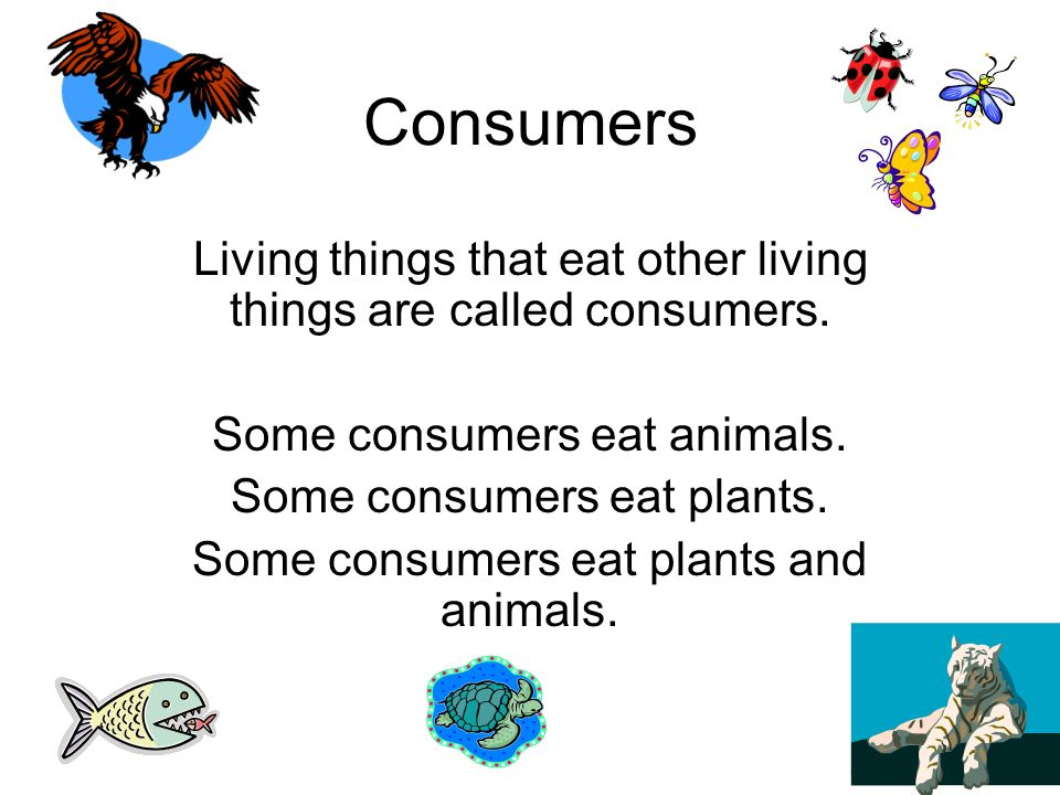 Consumers Living things that eat other living things are called consumers. Some consumers eat animals.
