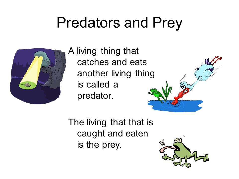 Predators and Prey A living thing that catches and eats another living thing is called a predator.